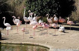 vist the bird park